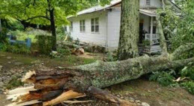 Storm damage prevention tips from ORFD