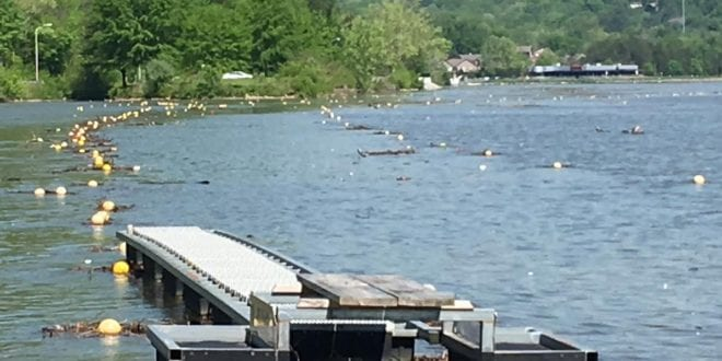 Dogwood Regatta canceled